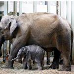 上野動物園の子ゾウの名前は「アルン」に決定!!